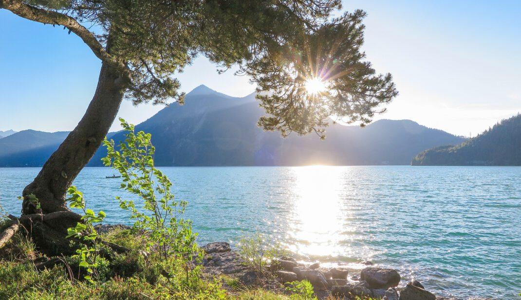 Walchensee im Gegenlicht mit Baum im Vordergrund
